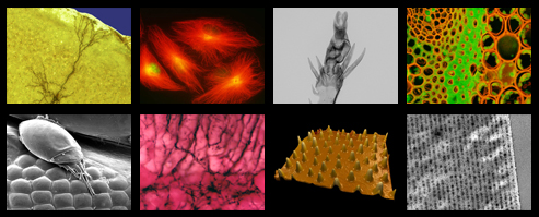 A collage of 8 images created in Beckman ITG's Microscopy Suite